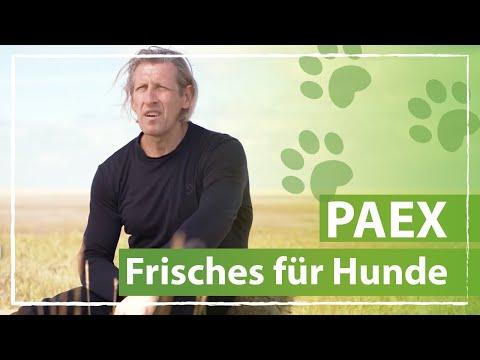 PAEX - Frisches für Hunde