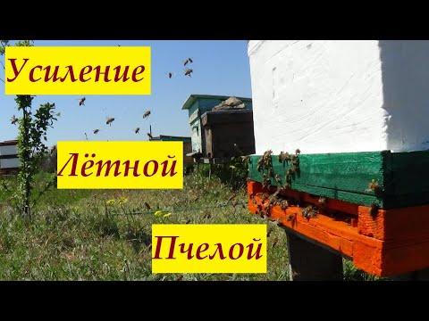 Выравнивание пчелиных семей на пасеке Лётная ротация