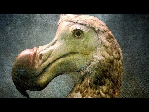The Real Reasons For the Extinction of Dodo Birds
