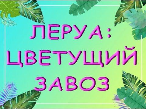 "ЛЕРУА:всё в ЦВЕТАХ!06.09.19,Самара,ТЦ""Космопорт"".ПРИВЕТЫ Ларисе и Наталье :)"
