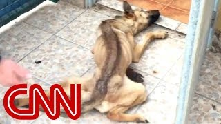 Download Youtube: See abandoned dog's amazing transformation