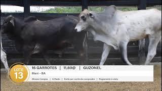 16 GARROTES GUZONEL