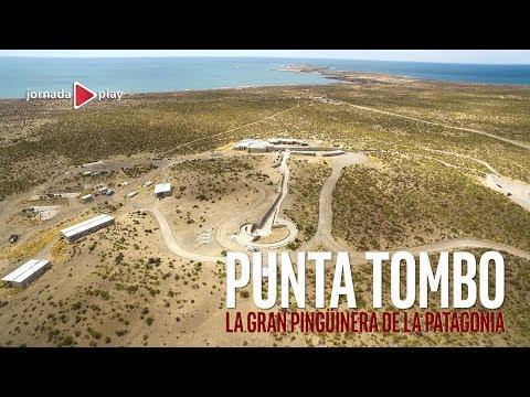 Punta Tombo, la gran pingüinera de la Patagonia