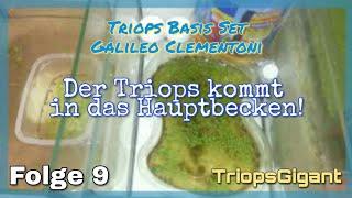 Der Triops Kommt Nun In Das Hauptbecken Folge 9 Basis Set Galileo Von