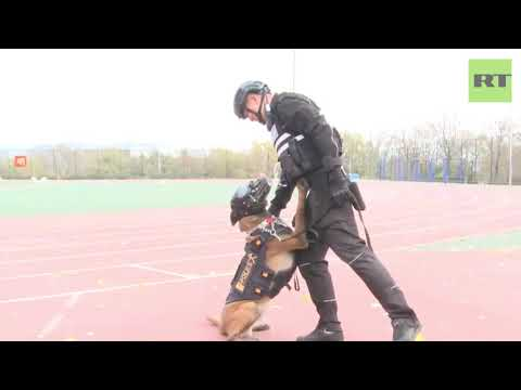Police dog competition held in China