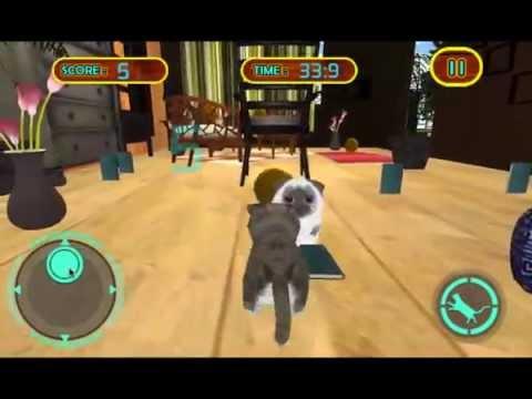 Real Haustier Katze Simulator Video
