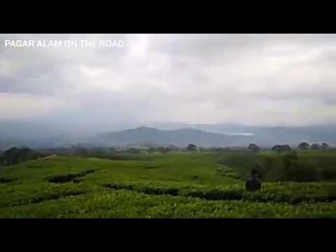 Pagar Alam on The Road_Wisata Kebun Teh #PagarAlam#GunungDempo
