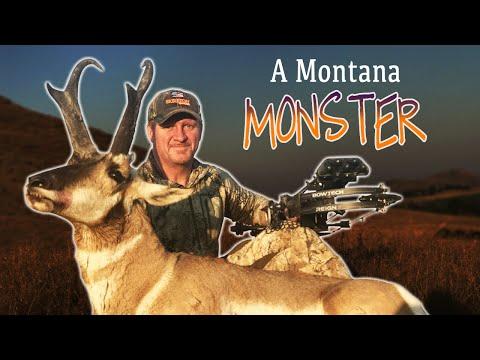 Montanská antilopa