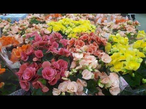 Красивые комнатные цветы в Леруа Мерлен.Обзор цен .