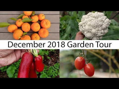 California Garden - December Garden Tour - Gardening Tips, Harvests & More!