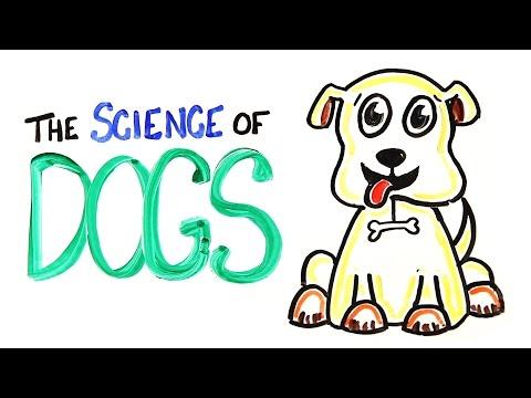 Poznatky o psech