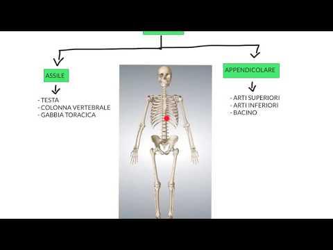 Che di striscio il mal di schiena nei reni