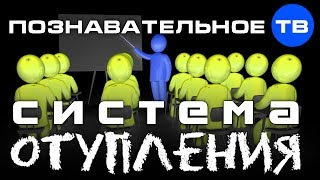 Система отупления (Познавательное ТВ, Николай Стариков)
