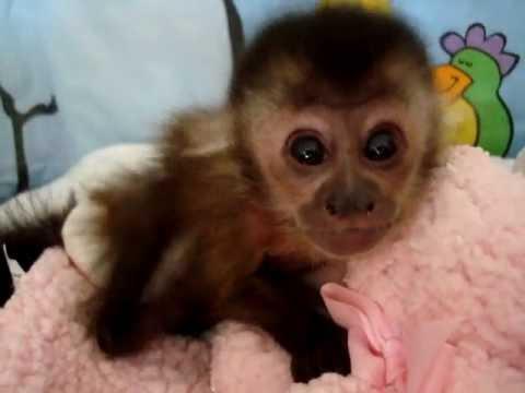 baby monkey cam
