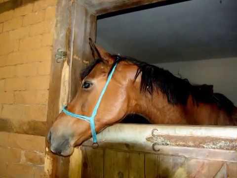 ускакала в поле молодая лошадь