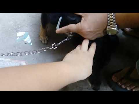 Kung paano mapupuksa ang worm at giardia