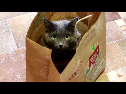 😺КАК МЫ ВЫЧЕСЫВАЕМ КОТА🙀 Уход за котом в домашних условиях. Кот Барсик😽😺
