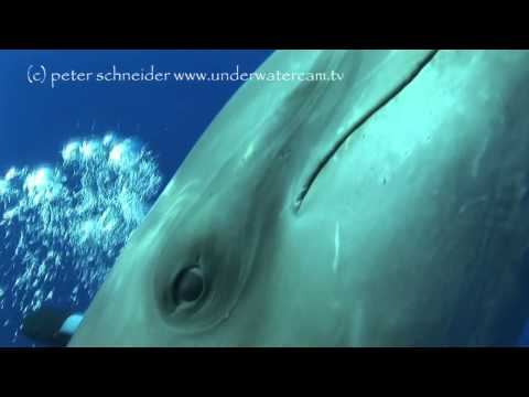 Dolphin/Touch, Rangiroa allgemein,Französisch-Polynesien