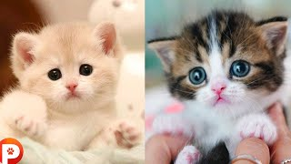 """funny and hilarious """"Cute Pets""""  and funny animals Compilation - Petsy -"""
