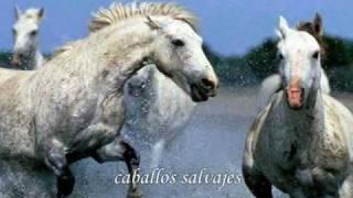 wild horses - Rolling Stones (traducido)