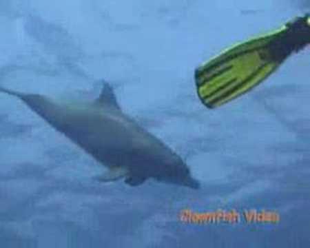 Delphin Begegnung