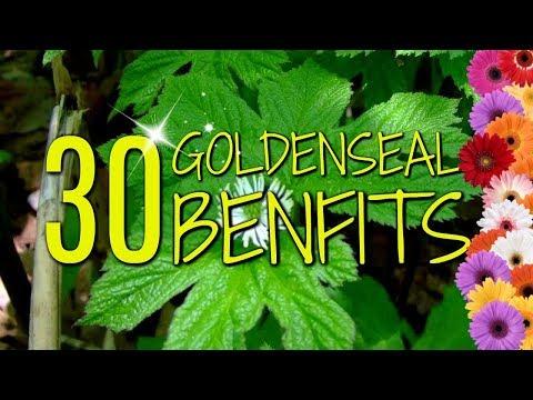 goldenseal gyökér paraziták