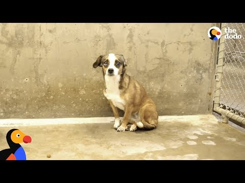 Scared Dog Never Wagged Her Tail Until She Met Her Foster Dad - BLOSSOM | The Dodo