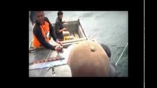 preview picture of video 'Mancing tenggiri telang 12 Kg senggora'