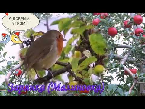 BULBUL OVOZI MP3 СКАЧАТЬ БЕСПЛАТНО