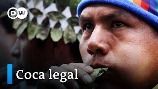 Cultivo legal de coca, ¿una opción para Colombia?