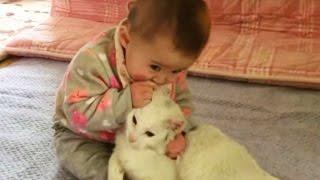 赤ちゃんに優しすぎる猫 Cat's Too Sweet (猫ちゃんと赤ちゃんはお友達2)