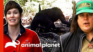 Hidden Camera Captures A Young Sasquatch! | Finding Bigfoot