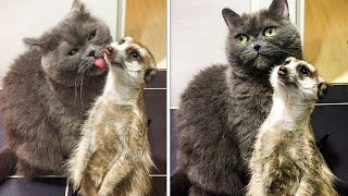 10 Unusual And Cute Pets 🙀