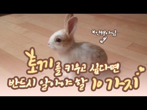 , title : '[Eng sub] 초보 토끼 키우기 (*ꆤ.̫ꆤ*) 토끼를 키우고 싶다면 반드시 알아야 할 10가지에 대해서! 아기토끼 꽃돌이 기록 창고 대방출합니다! 토끼 키우기 단점! 필독!'