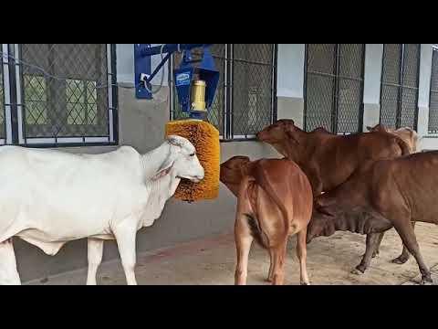 Cow Swing Brush