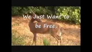 Elk V. Photographer in Great Smokies National Park - Stop Killing Elk and Deer