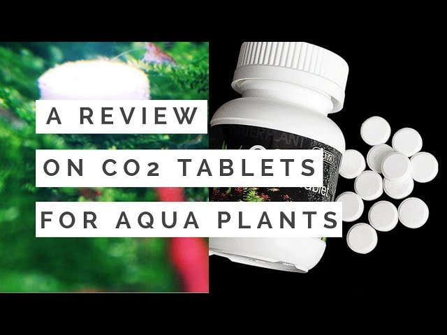 A Cheapest Co2 for any High tech Planted Aquarium...