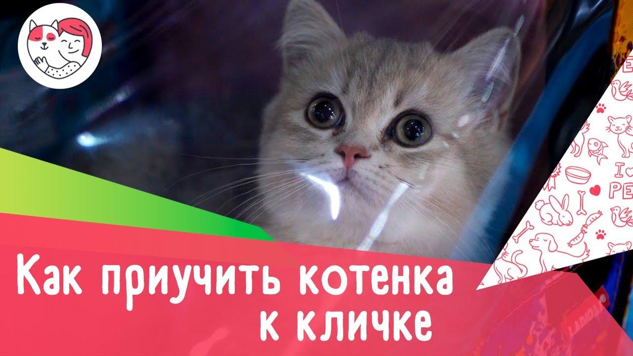 Как приучить котенка к кличке: 4 правила