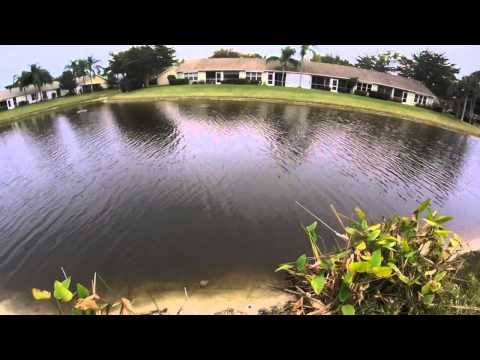 Bass Fishing In Florida Ponds (Part 1)