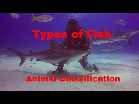 Types of Fish-Animal Classification