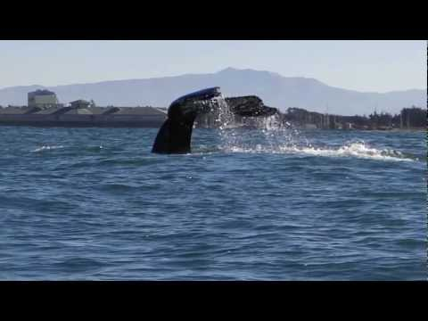Humpback Whales And Sea Lions By Kayak Monterey Bay