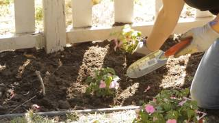 How to Space Impatiens in Planting : Garden Space