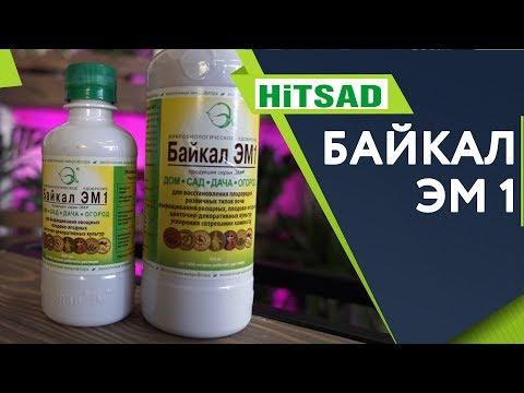 СЕКРЕТ Использования Байкал ЭМ1 ✔️ Лучшее удобрение для Сада ✔️ Советы от Хитсад ТВ