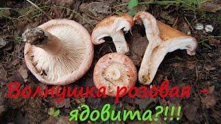 Волжанка гриб фото и описание