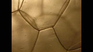 Video Elek3kotor - Nýt #19