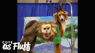Doggy Style - World's Craziest Dog Grooming | CUTE AS FLUFF