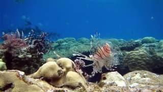 חבצלות הים - שי שפיר