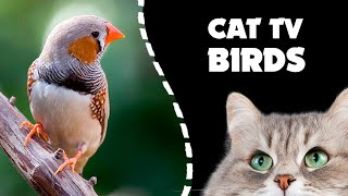 CAT TV ★ Zebra Finch BIRDS FOR CATS videos to watch