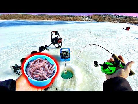 Ice Fishing w/ NIGHT CRAWLERS?!? --Surprisingly Effective Winter Bait!!