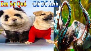 Dương KC   Bông Bé Bỏng Ham Ăn #19   chó thông minh vui nhộn   funny cute smart dog pets Thú Cưng TV
